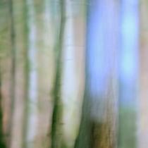 Im Wald IV by Martina Weise