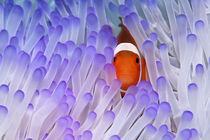 Hideaway, Nemo von Norbert Probst