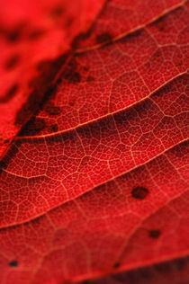 Nature 02 by Maike Helbig