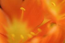 Flower 03 von Maike Helbig