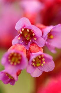 Blüten02 von Maike Helbig