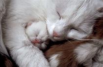 Katzenmutter mit Junges von Maike Helbig