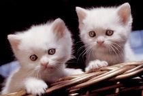 Kätzchen von Maike Helbig