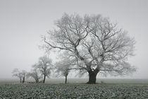 Frost von Stefan Michalski