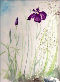 Sibirische Iris by Eva Pötzelsberger