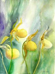 Gelber Frauenschuh by Eva Pötzelsberger