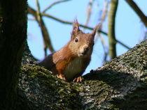 Eichhörnchen - Wer beobachtet wen? von Ralf Schröer