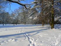 Winter im Park by Ralf Schröer