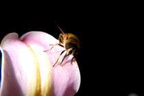 Biene von Anne Silbereisen