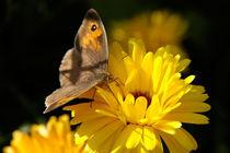 Schmetterling von Anne Silbereisen
