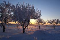 Wintermorgen 2 by Anne Silbereisen