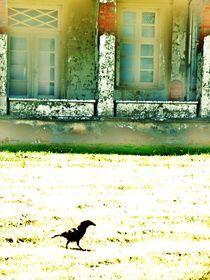 Krähe in Heiligendamm by Britta Franke