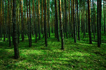 Wald by Lutz Wallroth