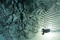 Ente by Lutz Wallroth