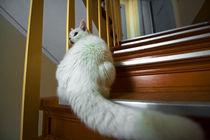 Katze by Lutz Wallroth