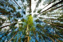 Wald von Lutz Wallroth