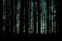 Nachtwald von Lutz Wallroth
