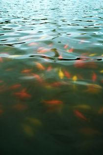 Goldfische von Lutz Wallroth