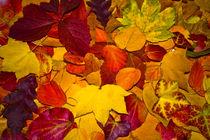 Herbststimmung, farbenprächtige  bunte Blätter by Bernard Fox