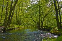 Fluß, Ufer, Flussufer, Landschaft, Bäume, Wasser,  von Bernard Fox