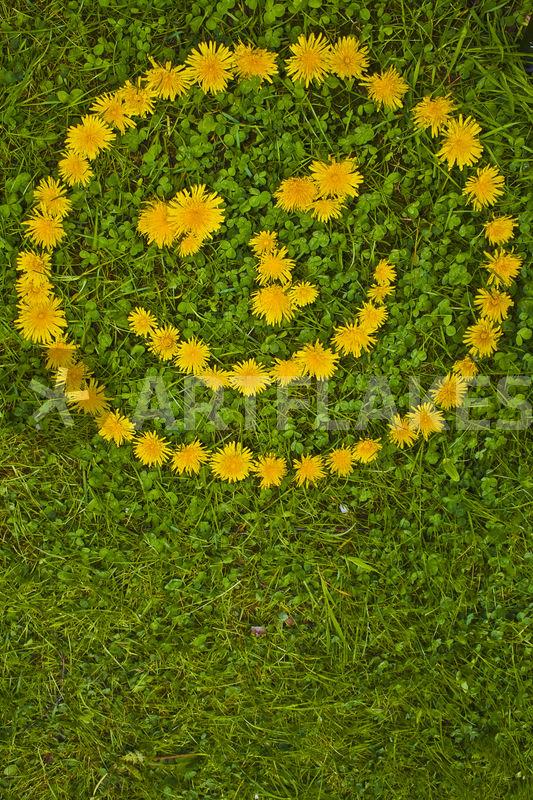Smileys blumen XL