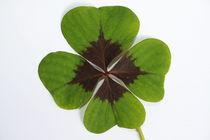 Glücksklee, Vierblättrig, Glücksbringer, Glück,  von Bernard Fox
