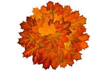 Herbstblätter, Ahorn, Stern, Herbst, Blätter, bunt von Bernard Fox