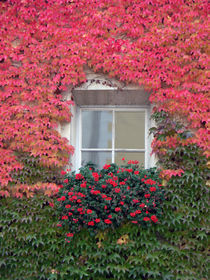 Fensterschönheit von christian grünberger TIAN GREEN