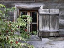 Fensterschau by christian grünberger TIAN GREEN