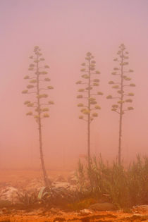 Bizarre Landschaft bei Sagres von Astrid Isensee