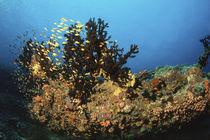 Korallen von Heike Loos