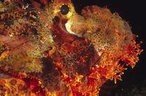 Drachenkopf II von Heike Loos