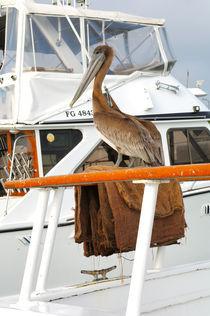 Pelikan von Heike Loos