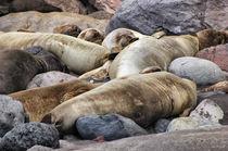 sleeping seals von Heike Loos
