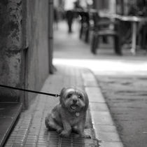 Der kleine Hund von Ralf Kochems