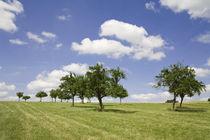 Bäume von Ralf Kochems