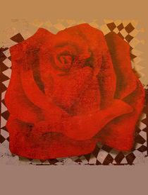 Rose by Karin Stein