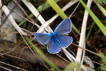 Schmetterling by Anja Uhlig