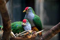 Walsrode Vogelpark by Anja Uhlig