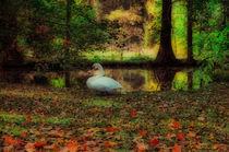 Herbstzeit by Michael Jaeger