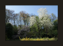 Blick in den Garten von Franziska Giga Maria
