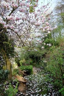Magnolie im Garten von Franziska Giga Maria