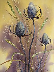Wilde Karde und Getreide by Kerstin Birk