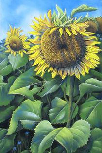 Sonnenblume von Kerstin Birk