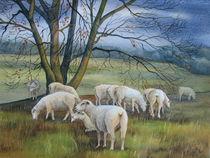 Schafe auf den Elbwiesen (Bobersen) by Kerstin Birk