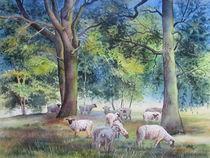 Schafe auf der Heide (Skassa) by Kerstin Birk