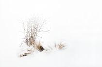 Schneegras by triviart
