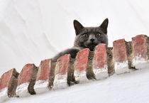 Auf der Mauer, auf der Lauer... von triviart