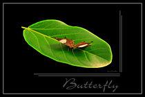 Schmetterlingsblatt by Rene Müller