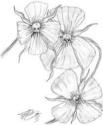 Blüten und Schädel von Andreas Willeitner